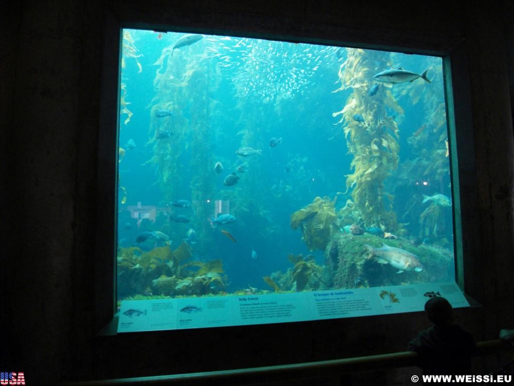 Monterey. - Westküste, Bay Aquarium, Fische, Monterey - (New Monterey, Monterey, California, Vereinigte Staaten)