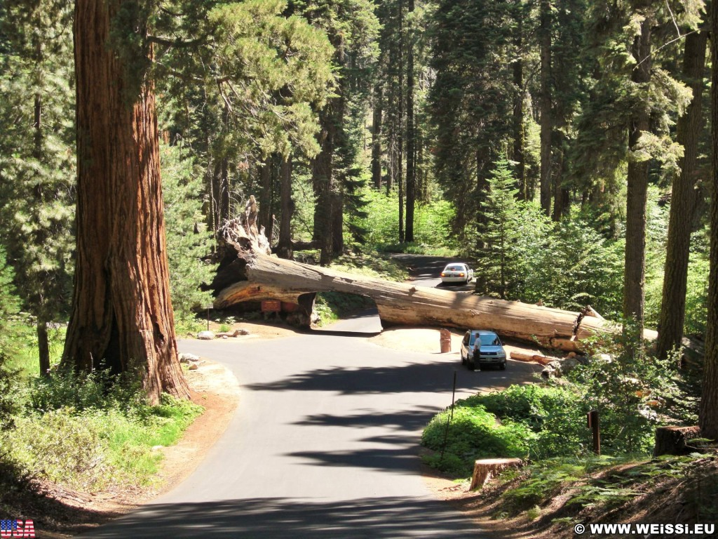 Sequoia National Park. - Sequoia Nationalpark, Mammutbaum, Baum, Mammutbäume, Baumstamm, Tunnel Log - (Pinewood, Sequoia National Park, California, Vereinigte Staaten)