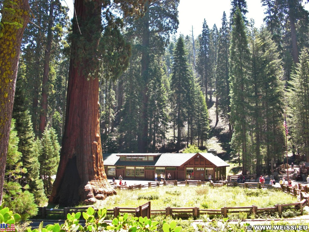 Sequoia National Park. - Sequoia Nationalpark, Baumstamm, Sentinel Tree, Giant Forest Museum - (Pinewood, Three Rivers, California, Vereinigte Staaten)