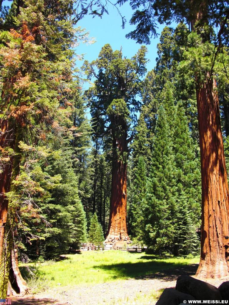 Sequoia National Park. - Sequoia Nationalpark, Mammutbaum, Baum, Mammutbäume, Sherman Tree Trail, General Sherman Tree - (Pinewood, Sequoia National Park, California, Vereinigte Staaten)