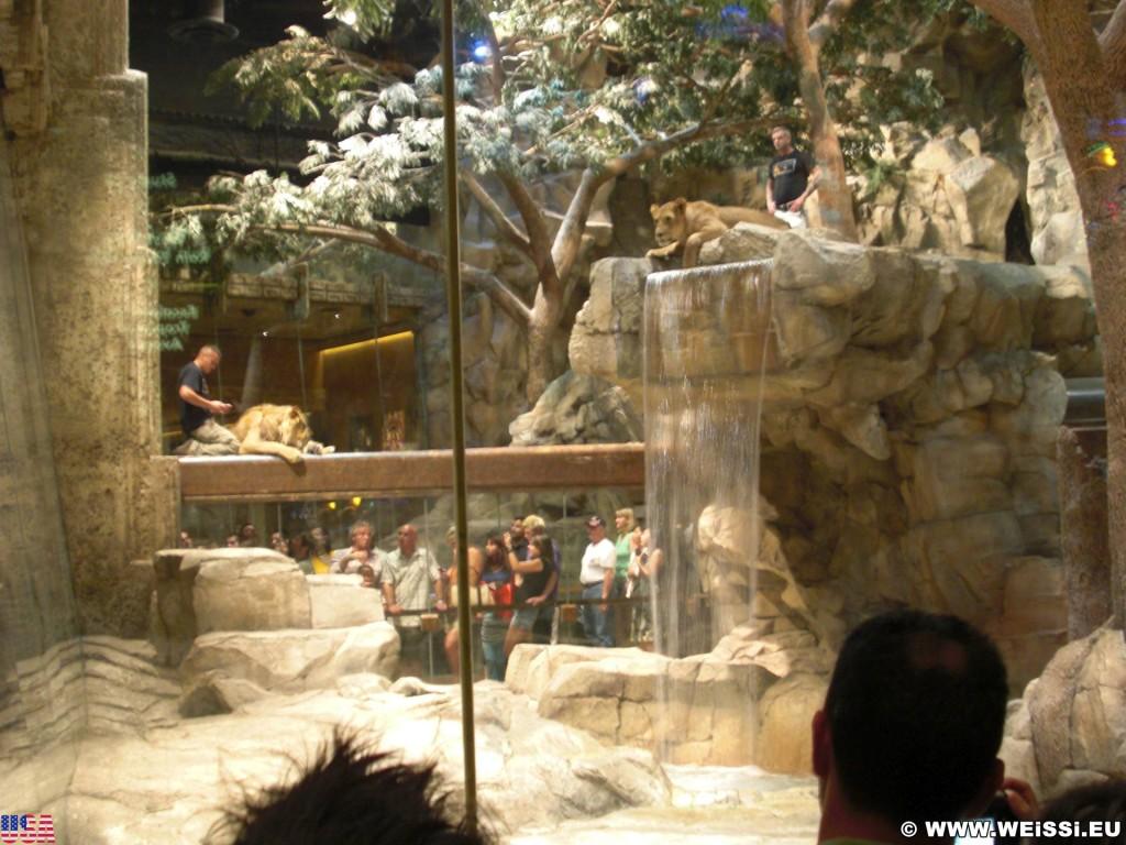 Las Vegas. - Las Vegas, MGM Grand Hotel, Lion Habitat, Lion, Löwe, Löwengehege - (Bracken, Las Vegas, Nevada, Vereinigte Staaten)