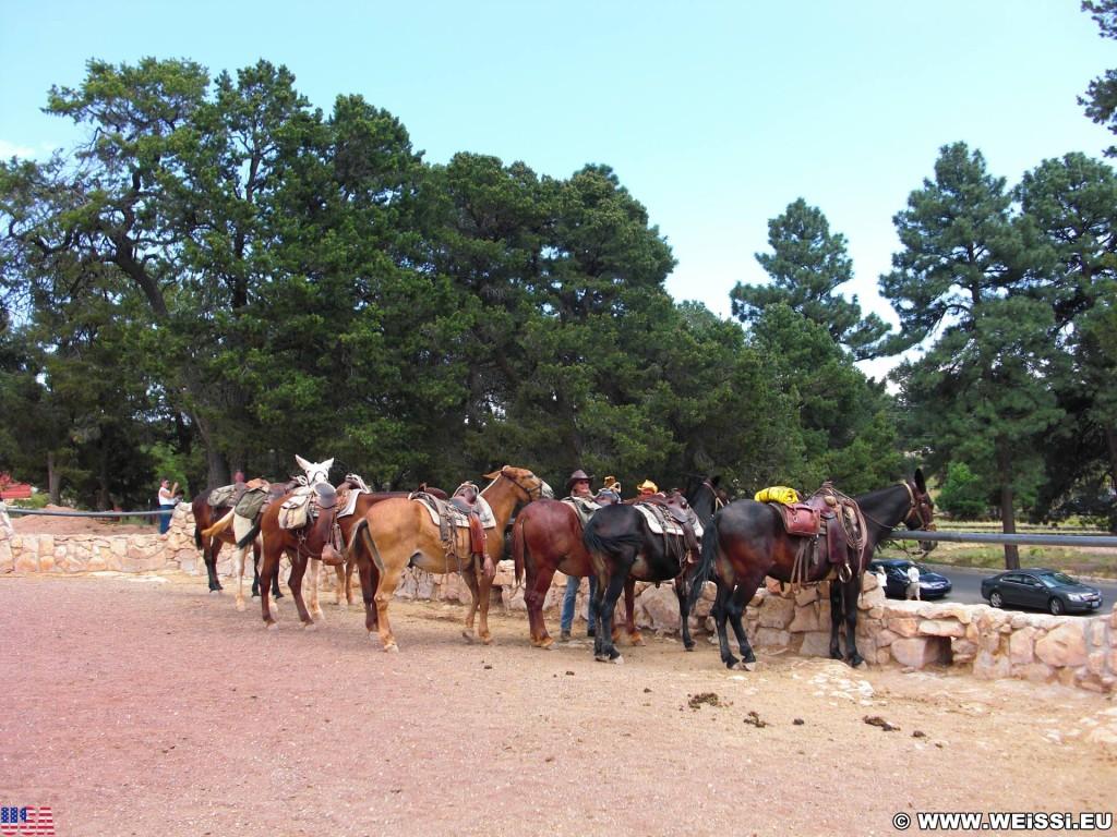 Grand Canyon National Park. Village - Grand Canyon National Park. - Tiere, Pferd, East Rim, Grand Canyon, National Park, East Rim Drive, Pferde - (Grand Canyon, Arizona, Vereinigte Staaten)