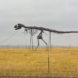 On the Road. Gassi gehen mal anders.... - Skulptur, Statue, Skulpturen, Figuren, Dino, Dinosaurier, Skelett, Tyrannosaurus rex, Midland, Stamford, Metallfiguren, T-Rex, Clarence Hullinger, Altmetall - (Stamford, Midland, South Dakota, Vereinigte Staaten)